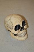Totenkopf klein